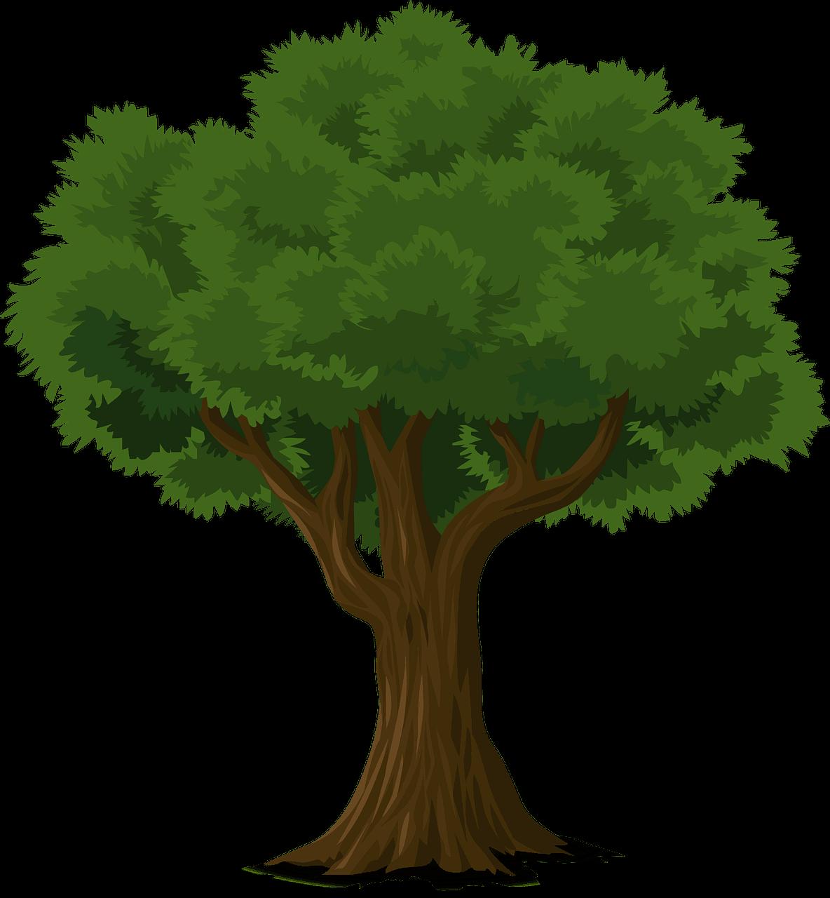 tree 576847 1280 Photosynthesis