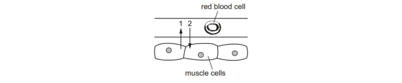 Cells and cell specialisation